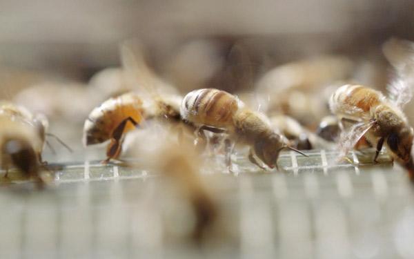 ビューティフル・ビーキーパー きれいな蜂飼い